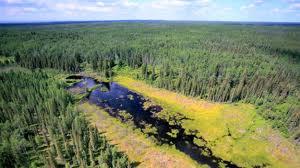 The Globe Spokane >> Alberta: Oil pipeline spill, 22,000 barrels going into Canadian marshes | GREY COAST ANARCHIST NEWS